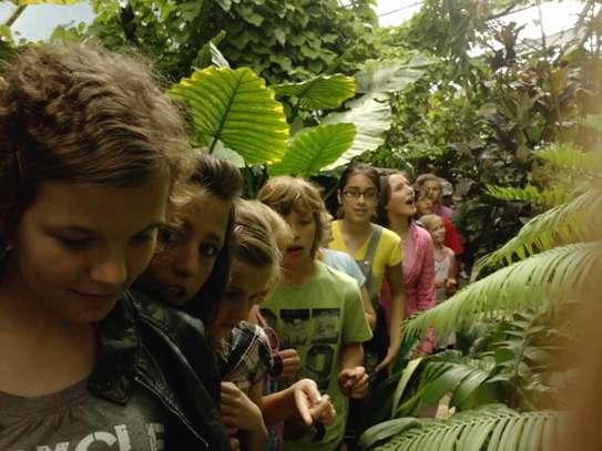 Motýlie dni v botanickej záhrade košice