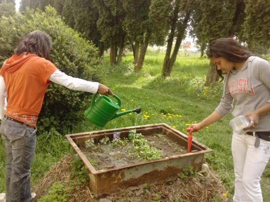 Starostlivosť o pestovanie priesad úžitkových rastlín v parenisku